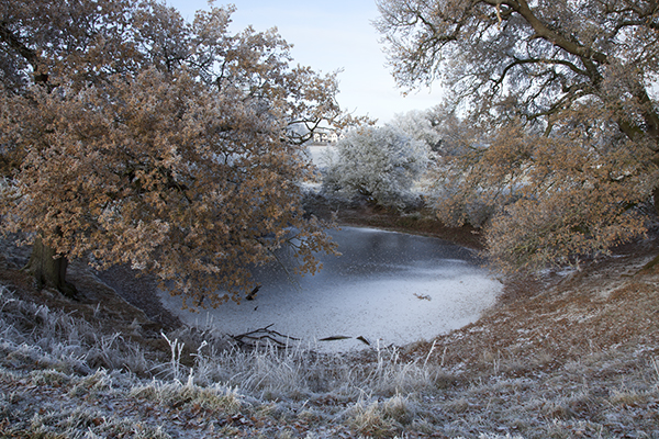 Photographic artwork'Pond' by Helen Sear. Image shows a frozen pond.